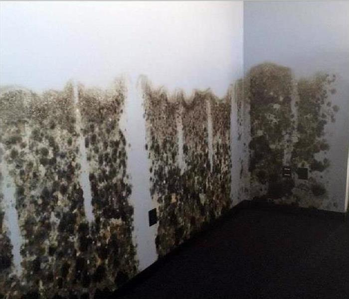 mold infestation growing on wall