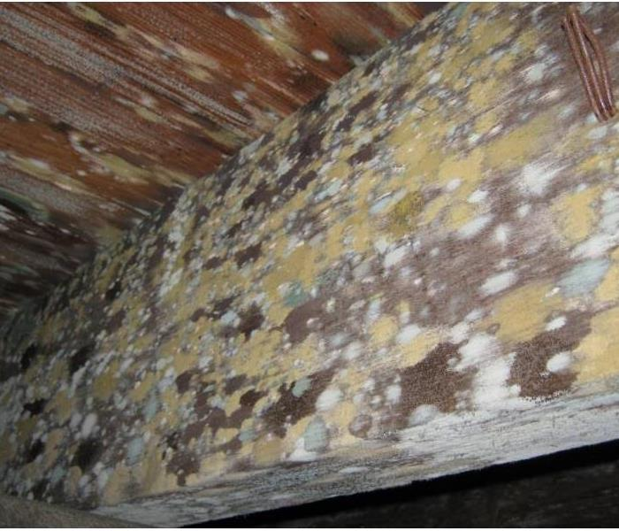 The photo shows mold on wood framing